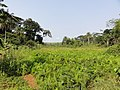 Inland valley rice culivation in Liberia - panoramio (1).jpg