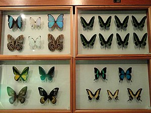 Insect exhibit in the Kunming Natural History ...