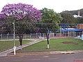 Ipê Roxo (Handroanthus impetiginosus) em frente a Dedini Indústria de Base - Sertãozinho - panoramio.jpg