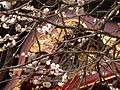 Japanese nature temple with flowers.jpg