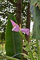 Jardim Botânico da Madeira DSC 0368 (14513251319).jpg