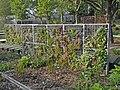 Jardin des Géants à Lille - Murs végétalisés - panoramio.jpg
