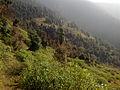 Jiri-beautiful mountain forest nov 2012.jpg