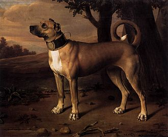 "Great Dane - A ""chamber dog"" with a gilded collar, Brandenburg (Germany), 1705"