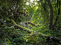 Jungle, Lazarev Kanjon.jpg