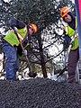 KPU Telecommunication and the City of Ketchikan erecting a Sitka Spruce.jpg