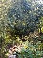 KURUMBAPATTI ZOOLOGICAL PARK, SALEM - panoramio (5).jpg