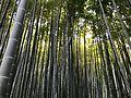 Kamakura bambu temple.jpg