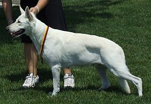 "Conformation show - Dogs may also be presented standing freely, in the so-called ""self stack"" or ""free stack""."