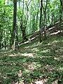 Kaniv Nature Reserve (May 2018) 93.jpg