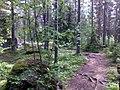 Karkuvuori - panoramio (1).jpg