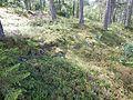 Kastrudborgen VI.jpg
