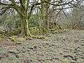 Kilbirnie Place - walled garden ruins.JPG