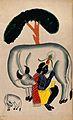 Krishna milking a cow while the calf looks. Watercolour draw Wellcome V0045170.jpg