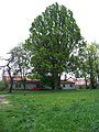 Kunratický zámecký park, antropologické oddělení (01).jpg