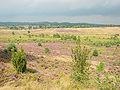 Lüneburger Heide 122.jpg