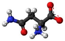 Ball-and-stick model of the L-asparagine molecule as a zwitterion