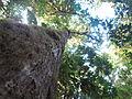 La Amistad Panama Biosphere Reserve - Parque Nacional Volcan Baru (a core zone) 24.JPG