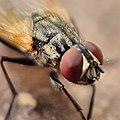 La mirada de una mosca.jpg