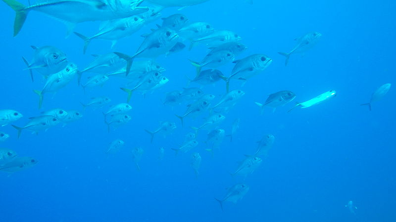 File laika ac school of fish 7359597618 jpg wikimedia for H m fish count
