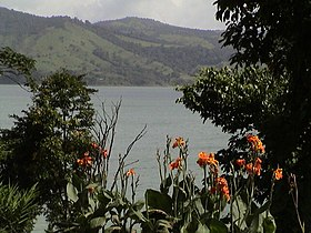 Lake Arenal Flowers.jpg