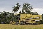 Langkawi Malaysia Rice-Harvesting-11.jpg