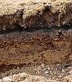 Layers in soil on Dartmoor.jpg