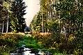 Leśne ostępy - panoramio.jpg