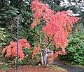 Lea Hill, Auburn, WA 98092, USA - panoramio.jpg