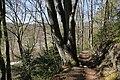 Leitenwälder der Isar 0631.jpg