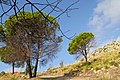 Licata, Sicily - 49672996076.jpg