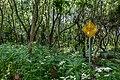Liebiadziny reserve (Belarus) 04.jpg