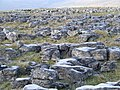 Limestone Pavement - geograph.org.uk - 636837.jpg