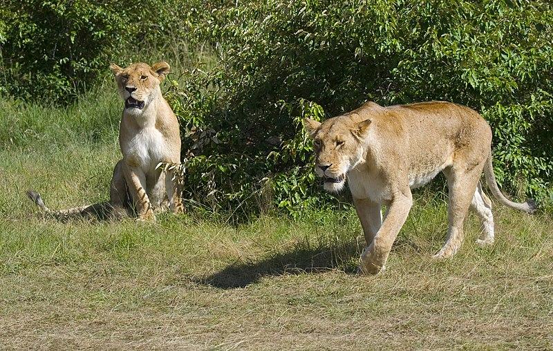 Resultado de imagem para Parques nacionais - angola