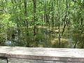 Little River Trail 04, Reed Bingham Park.JPG