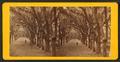 Live Oak Avenue, Bonaventure Cemetery, Savannah, Ga, from Robert N. Dennis collection of stereoscopic views 9.png