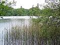 Loch of Clunie - geograph.org.uk - 870171.jpg