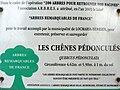 Locmaria-Berrien 7 Panneau d'information des deux arbres remarquables de france.JPG