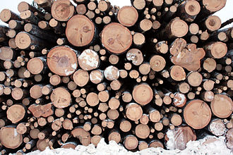 Bucked old growth wood in Finland Logging in Finnish Lapland.jpg