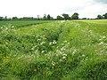 Lush vegetation growing alongside drainage ditch - geograph.org.uk - 1314422.jpg