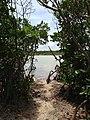 Mangrove View - panoramio.jpg