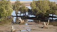 Mangrove on Westcoast Madagascar I.jpg