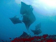 beaucoup de poissons datant soleil côte Queenslandmoments en ligne datant