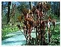 March Spring Botanischer Garten Freiburg - Master Botany Photography 2013 - panoramio (10).jpg