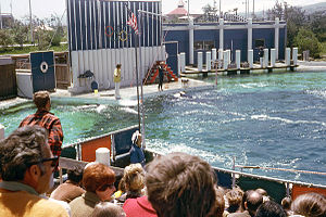 Marine World/Africa USA - Orca show at Marine World in 1970