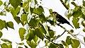 Marsh Birds (3615207791).jpg