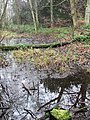 Marshy woodland, Clumber - geograph.org.uk - 653036.jpg