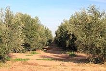 Menara-Garten – Wikipedia