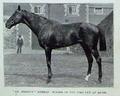 Merman-(Lily-Langtree-horse).png