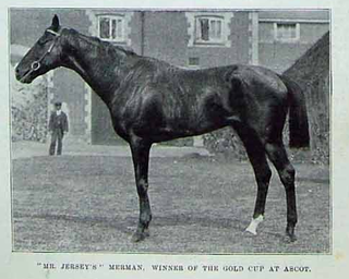 Merman (horse) race horse born in 1892